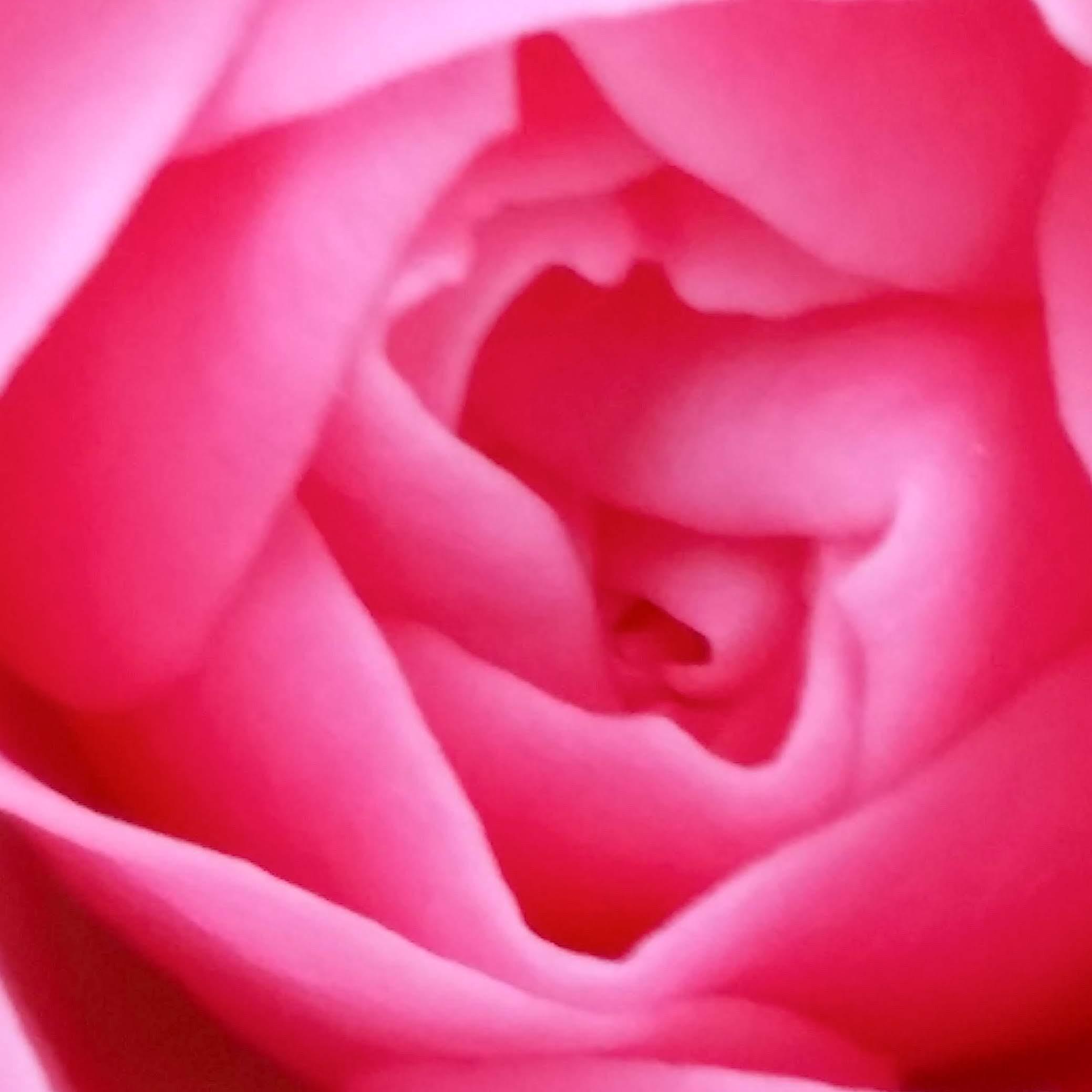 Coeur de Rose Feli