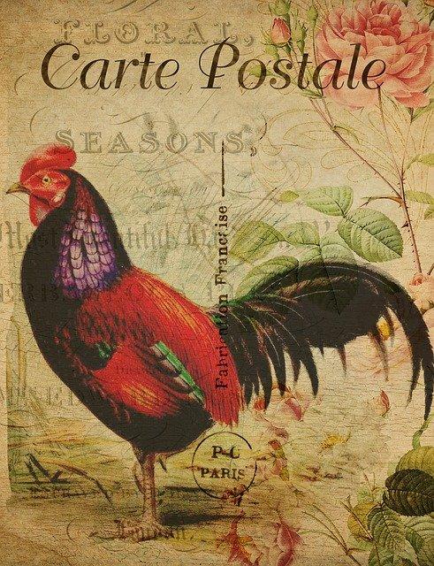 Carte postale carré Féli